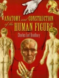 Anatomy and Construction of the Human Figure 9780486141312