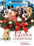 12 Dogs of Christmas 9781418568580