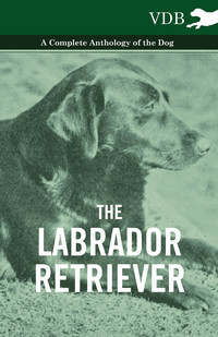The Labrador Retriever - A Complete Anthology of the Dog              by             Various