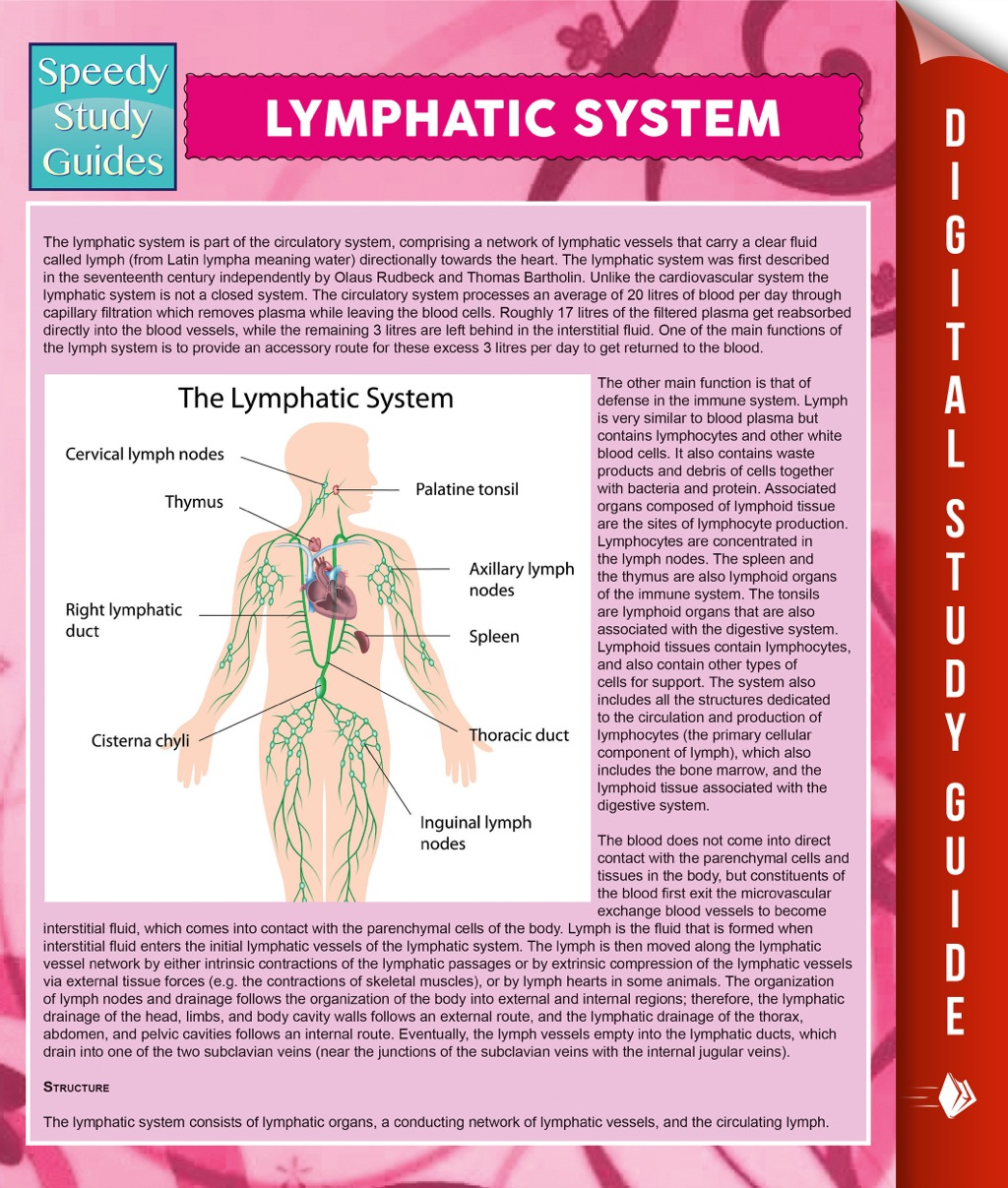 Lymphatic System (eBook)