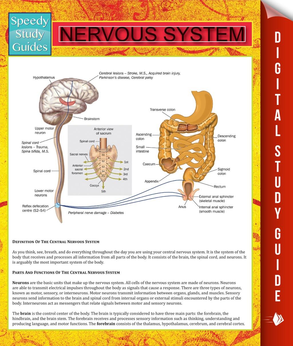 Nervous System (eBook)