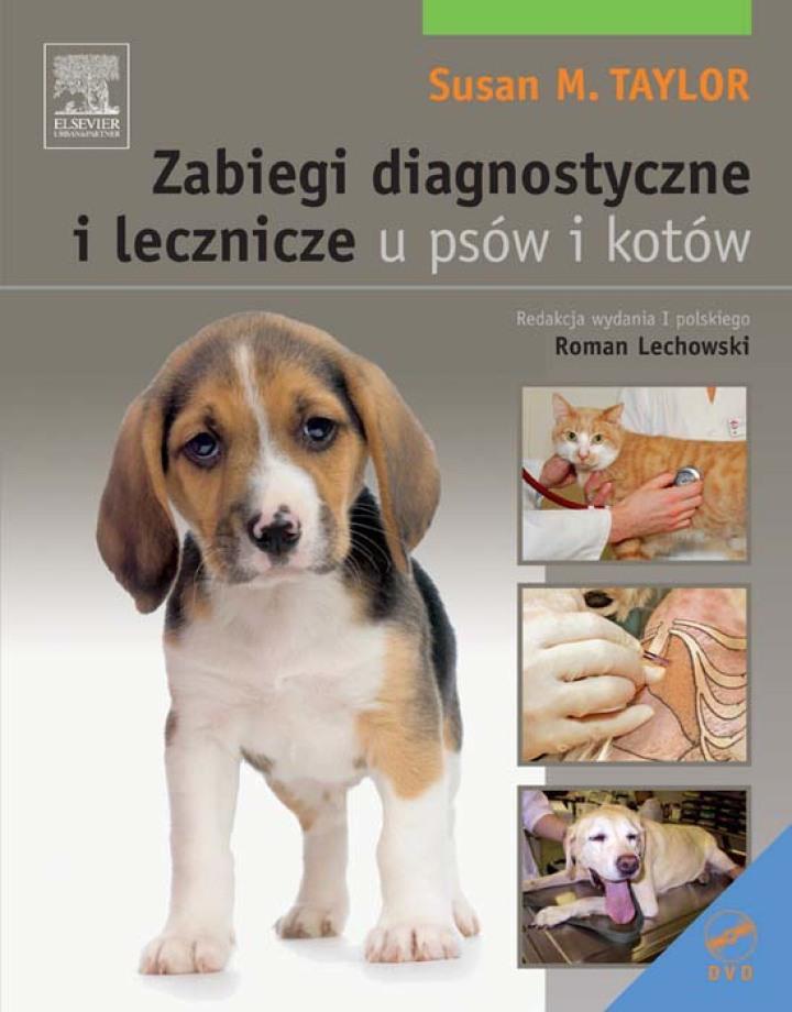 Zabiegi diagnostyczne i lecznicze u psów i kot